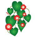 Ipomoea red star flower vector image vector image