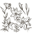 set of linear flowers and buds vector image