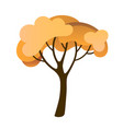 yellow autumn tree flat cartoon design vector image