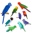 Cartoon parrots collection Parrot wild animal vector image