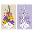 Flowers Iris vector image