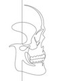 human skull continuous line art vector image vector image