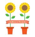 Sunflowers Pot Plant vector image