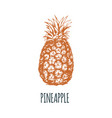 hand drawn pineapple on white background vector image vector image