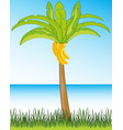 beautiful landscape seeshore and palms with banana vector image vector image