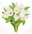 Bouquet of white tulips vector image vector image