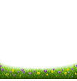 crocus flowers border with grass vector image vector image