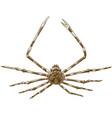 Engraving japanese spider crab