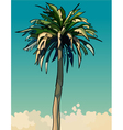 cartoon drawn tall sprawling decorative palm tree vector image vector image