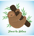 cute hand drawn sleeping sloth on branch vector image vector image