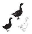 hand drawn goose set vector image vector image