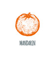 hand drawn mandarin on white background vector image vector image