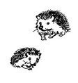 hedgehog stylized drawing vector image