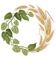 hops and wheat botanical vector image vector image