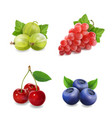 sweet berries grape cherry blueberry gooseberry vector image vector image