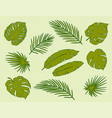 tropical hand drawn palm leaves branches set vector image