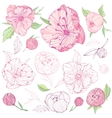 set isolated peony flowers vector image