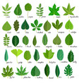 set of tree leaves vector image vector image
