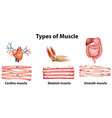Types of muscle vector image vector image