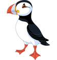 Atlantic Puffin vector image vector image
