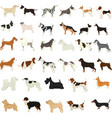 set flat cute cartoon dogs popular breeds vector image