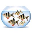 Aquarium with fish vector image