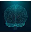 human brain The structural vector image vector image
