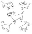 Set of adorable jack russell vector image