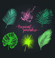vintage palm leaves tropic vector image vector image