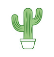 mexican potted cactus natural plant decoration vector image