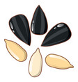 sunflower seeds icon cartoon style vector image
