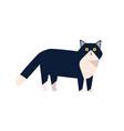 adorable mammal domestic animal flat vector image