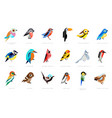 collection birds lilac breasted roller vector image vector image
