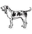 decorative portrait of dog bracco italiano vector image vector image
