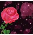 Greeting or invitation card with rose vector image vector image