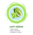 leafy green vegetables useful products when vector image