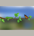 life cycle of butterfly with eggs caterpillar vector image