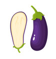 bright of fresh eggplants vector image