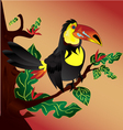 Toucan-Bird vector image