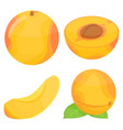 apricot icons set isometric style vector image vector image