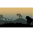Silhouette of gorilla and giraffe vector image