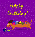 dachshund with gift boxes upon the back on violet vector image
