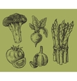 hand drawn of vegetables vector image
