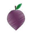 plum fruit icon vector image vector image