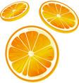orange slice - isolated on white background vector image