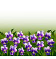 A lot of violet pansy flowers vector image vector image