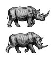 african rhino walking sketch of rhinoceros animal vector image vector image