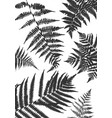 background with fern leaves vector image vector image