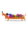 cute cartoon long dachshund carrying gift boxes vector image vector image