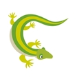 Green water dragon lizard nature animal reptile vector image vector image